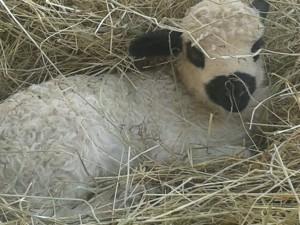 BB mouton (2)